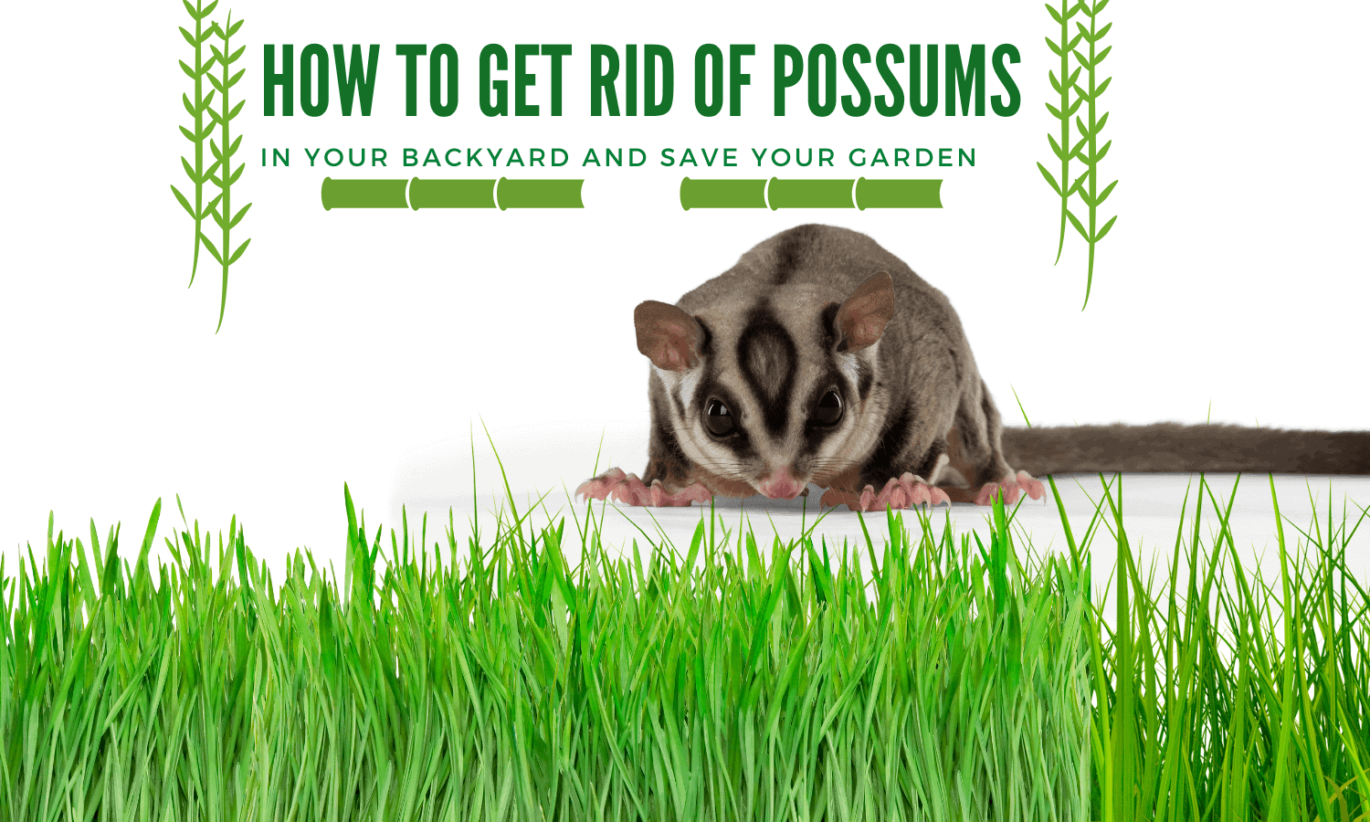 How To Get Rid of Possums In Your Backyard: Natural Remedy